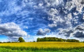 Мальовниче поле і синє небо